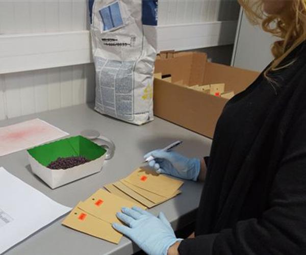 Pregatire retea testare RITAC